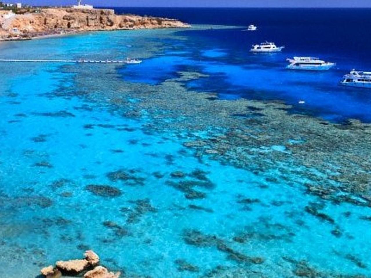 Tiran Island Snorkelling Trip