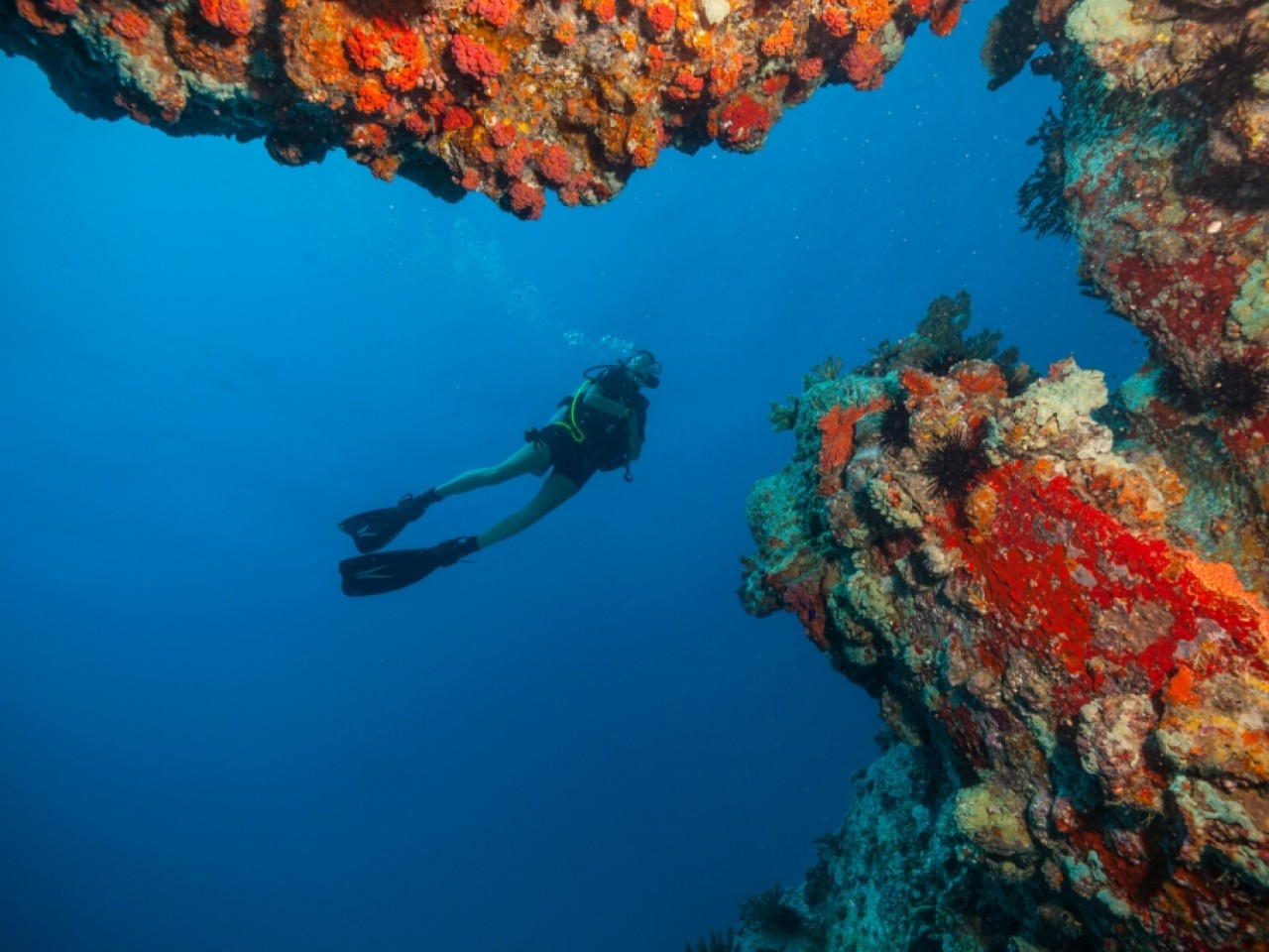 Full Day Diving Trip Including Lunch