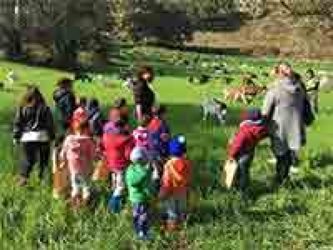 Special FAMILY: children in the FARM