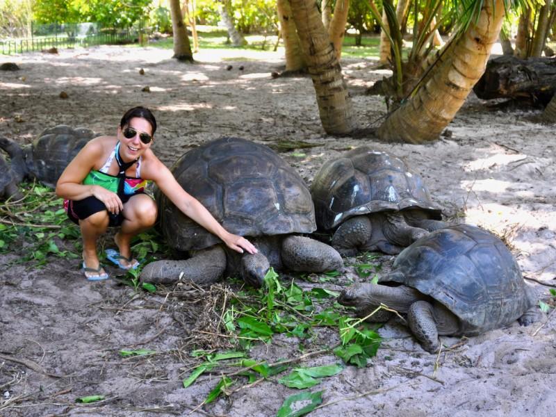 Tartarughe di Aldabra
