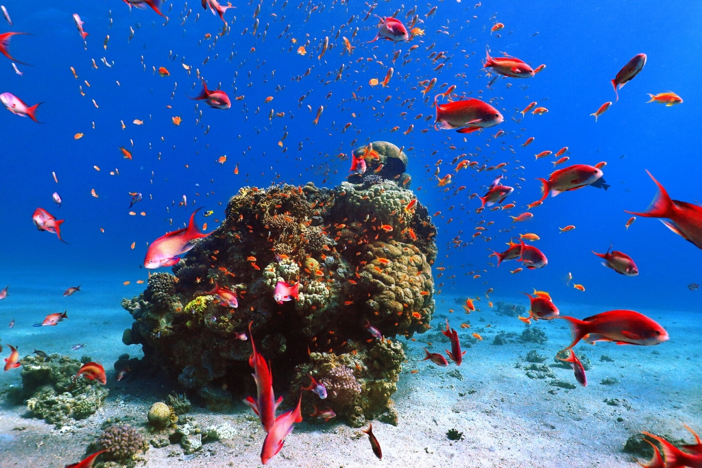 The magnificent corals and fish in the Red Sea